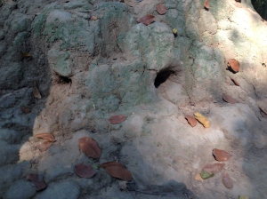 A termite mound hiding ventilation holes for the tunnels below.